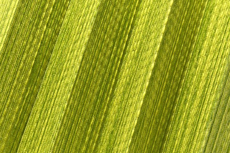 Plissee Grün Torres-4139 Maßanfertigung